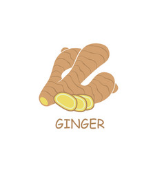 Ginger root vector