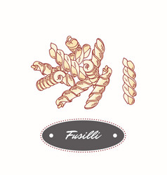 hand drawn pasta fusilli isolated on white vector image
