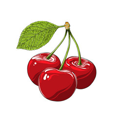 hand drawn sketch cherry in color isolated on vector image