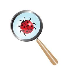 ladybug under a magnifying glass vector image