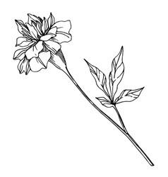 Marigold floral botanical flowers black vector