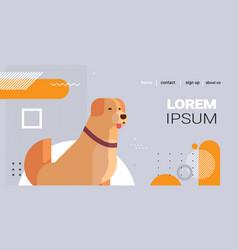 retriever icon cute dog labrador furry human vector image