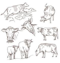 set of bulls vector image