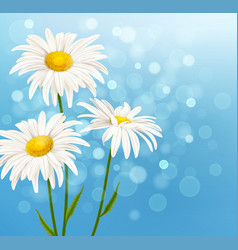 white daisy flowers on a blue background vector image