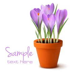 fresh spring flowers easter background vector image vector image