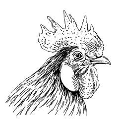 Hand sketch rooster head vector image