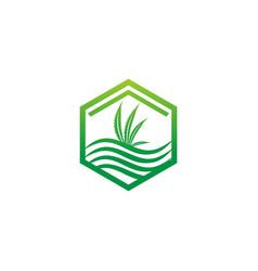 cannabis leaf icon design logo vector image