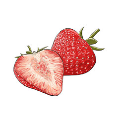 hand drawn sketch strawberry in color isolated vector image