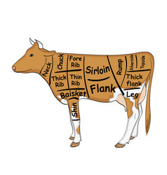 Isolated object on white background the cow for vector