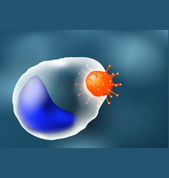 phagocytosis leukocyte and virus vector image