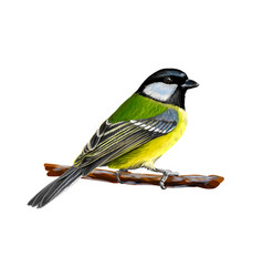 Portrait of a tit bird sitting on a branch on vector