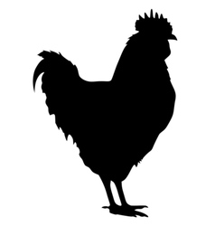 black silhouette of cock vector image vector image