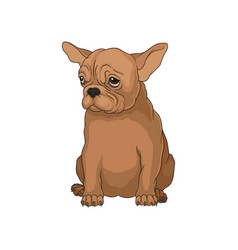 cute purebred boston terrier puppy in sitting vector image