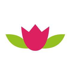 lotus flower decoration on white background vector image