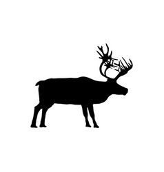 reindeer isolated on white background vector image
