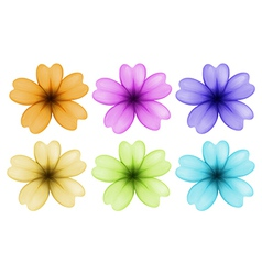 Six colourful and blooming flowers vector
