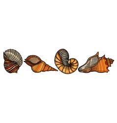 set of sea shells vector image