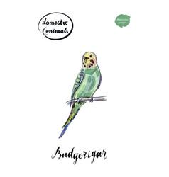watercolor green and yellow budgerigar vector image