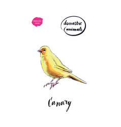 watercolor yellow canary bird vector image