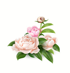 3d realistic pink peony elegant bouquet vector image