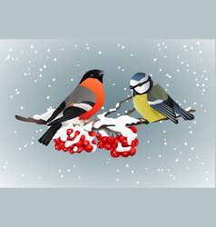 Bullfinch and titmouse sitting on snow-covered vector