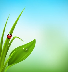 Green grass plantain and ladybug on blue sky vector