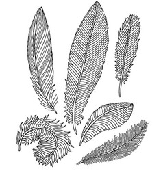 Hand drawn feathers vector