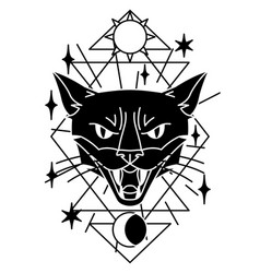 magic with cat mystic alchemy vector image