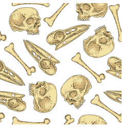 Seamless pattern with skulls and bones vector
