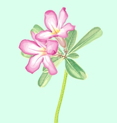 Watercolor painting impala lily vector