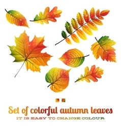 Set of colorful autumn leaves EPS 10 vector image vector image
