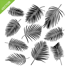 Collocetion of Palm leaves silhouettes vector image vector image