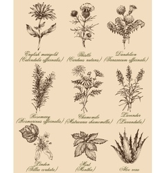 Flowers and herbs set Medicinal plants and spices vector image