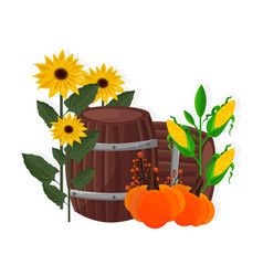 Autumn harvest sunflower corn pumpkin and barrel vector