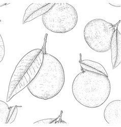 Citrus mix - lemon lime fruit orange mandarin vector