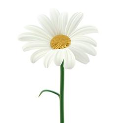 Daisy vector