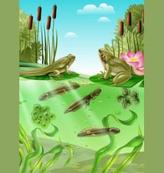 Frog life cycle realistic image vector