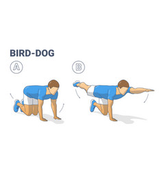 Man doing bird dog exercise to train his core vector