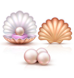 Opened and closed seashells with pearls isolated vector