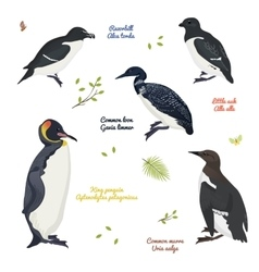 Set of different birds king penguin common loon vector