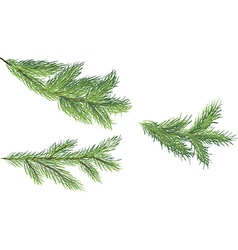 Set of fir brunches vector image