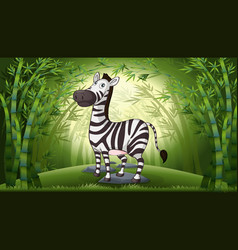 a zebra in bamboo forest vector image