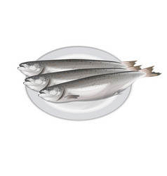 salmon fish on the plate vector image