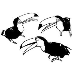 Toucan set vector
