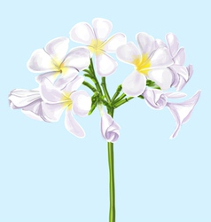 Watercolor Painting of Plumeria vector image