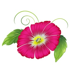 A big carnation pink flower vector