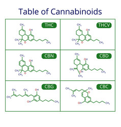 Cannabis skeletal cbd formula marijuana molecules vector