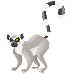 Cute lemur on white background vector