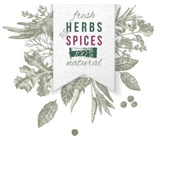 herbs and spices composition with paper emblem vector image