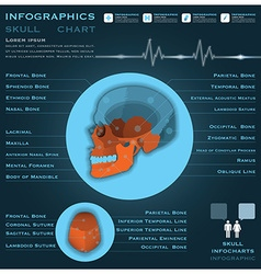 Skull infographic infocharts health and medical vector